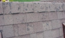 Hail Damage Shingles